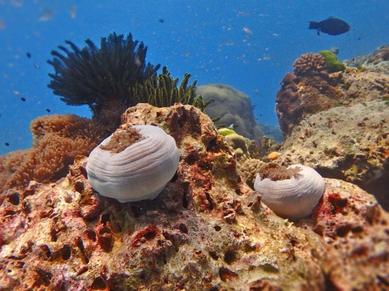Anemon Reef
