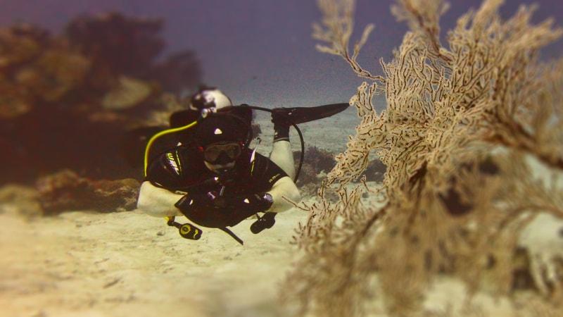 PADI Drift Diver – погружения в условиях течений