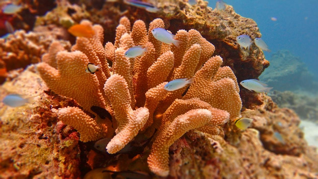 Дайв-сафари – Симиланские острова